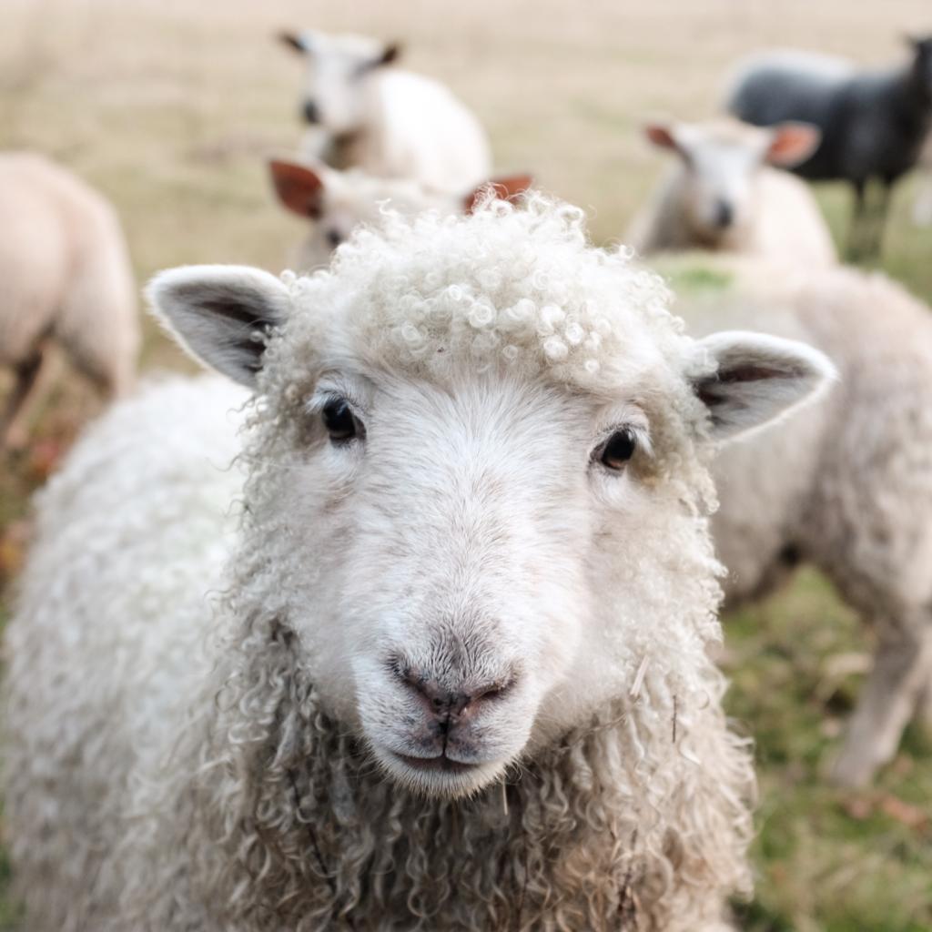 veganisme diervriendelijke producten