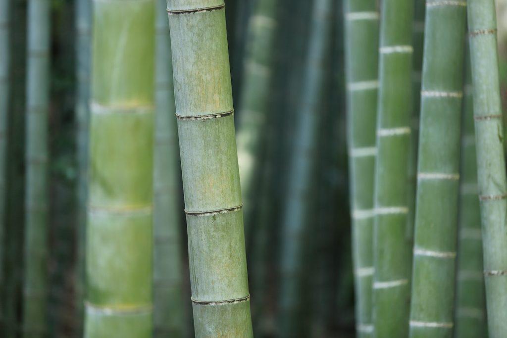 Duurzaam bamboe
