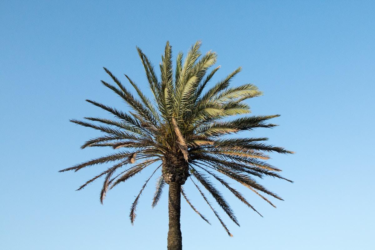 kokosnoot duurzaam
