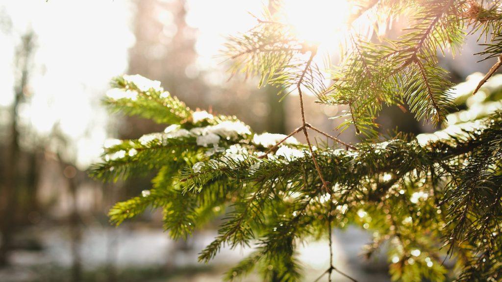 Duurzaam kerstpakket groene kerstboom