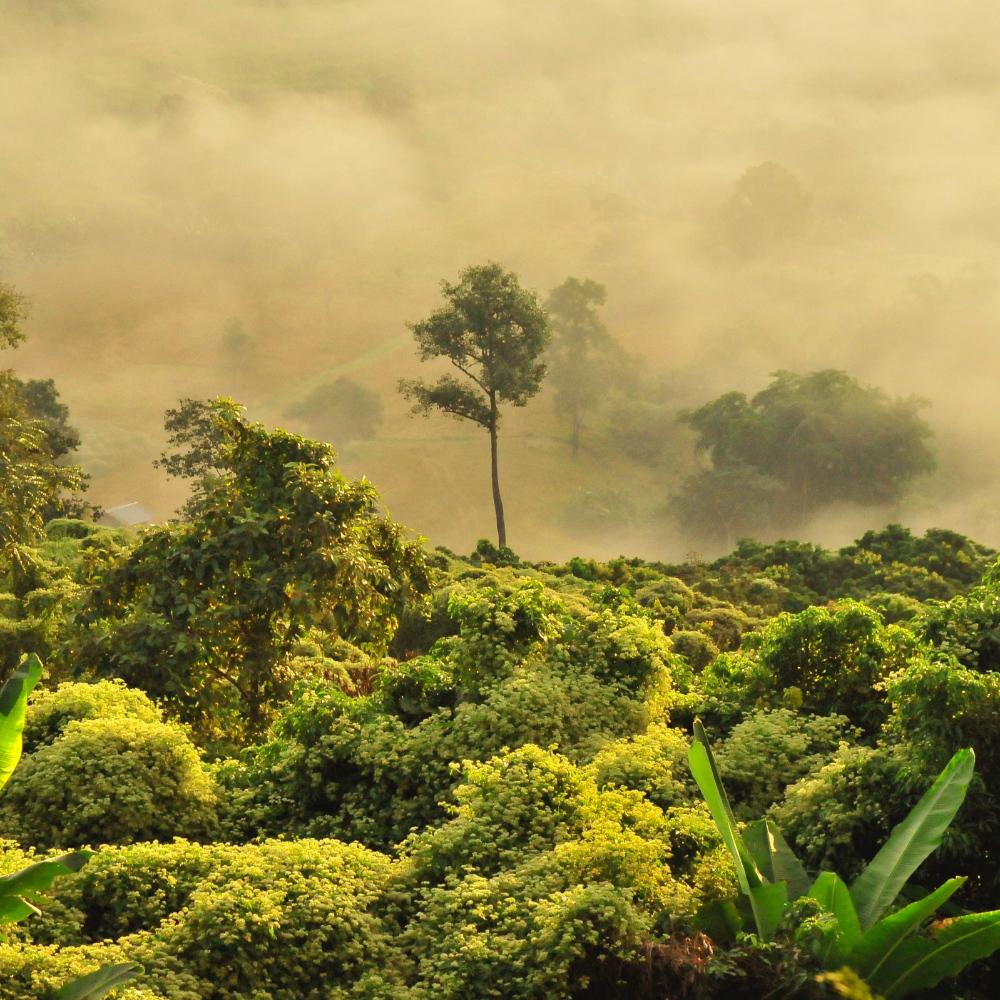 Regenwoud kappen Braziliaans