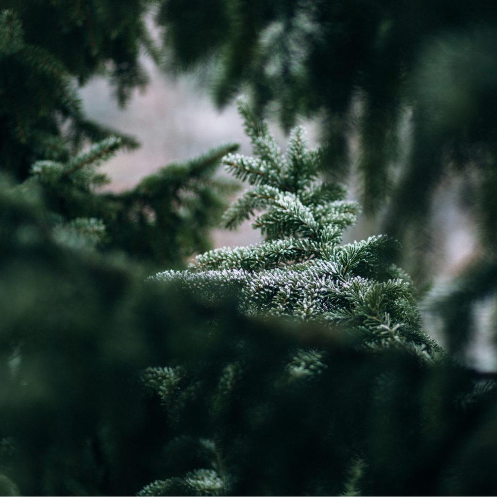 Duurzame groene kerst