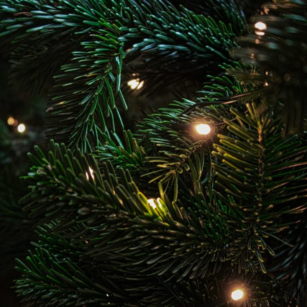 Kerstboom duurzaam
