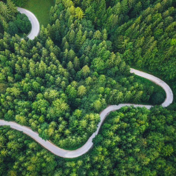 duurzaam reizen bomen