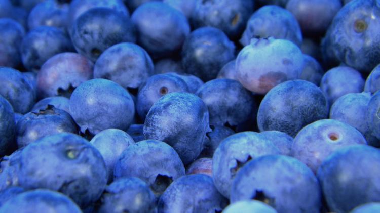 blauwbessen duurzaamheid eten
