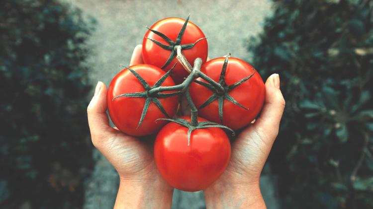 lokaal duurzaam eten tomaten