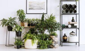 weerstand versterken natuurlijke manier planten