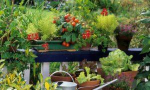 natuurlijke groenten verbouwen