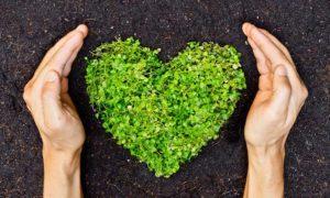 tuinieren gezond