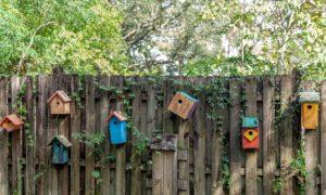 duurzaam tuinieren met vogels