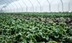 waterverspilling voorkomen groenten
