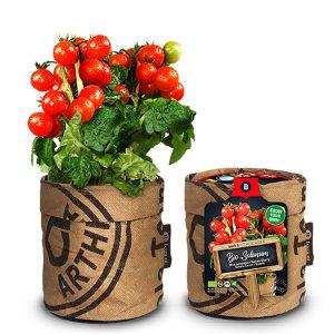 keuken-tomaat-plant