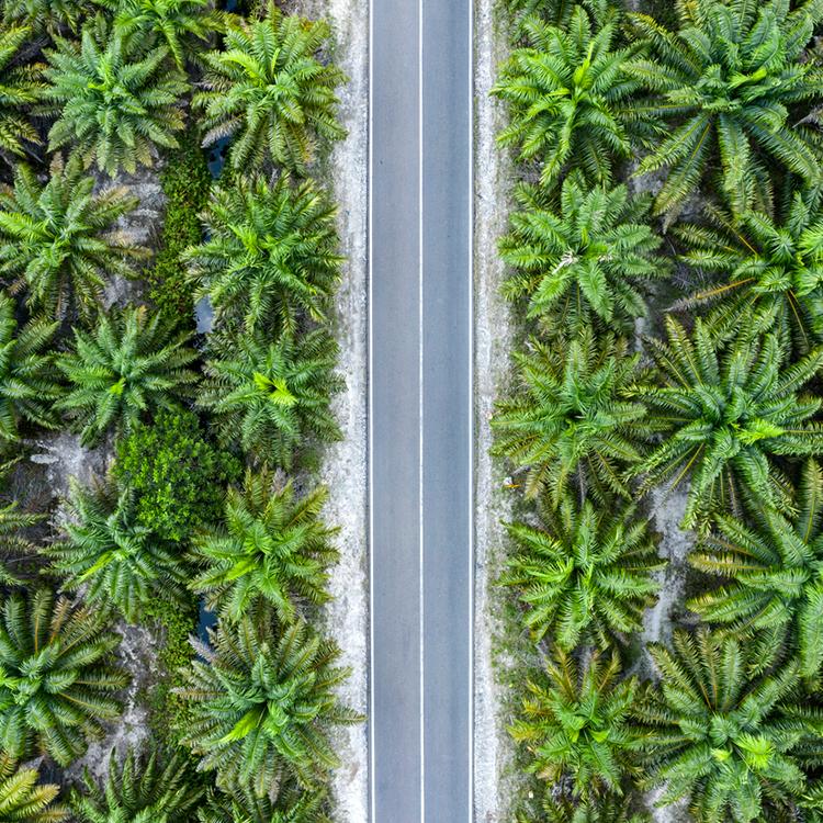 gids palmolie producten