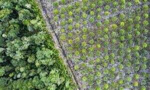 palmolie verdwijning jungle