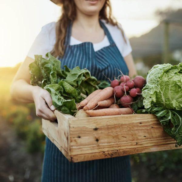 groenten kweken keukenafval