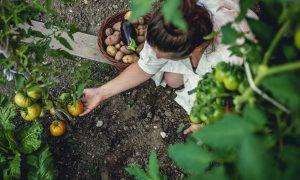 groenten kweken kliekjes 1