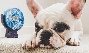 koelen zonder airco hond