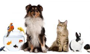 duurzame tips huisdieren
