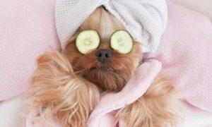 duurzame verzorging huisdieren