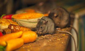 hoe muizen natuurlijk bestrijden 1