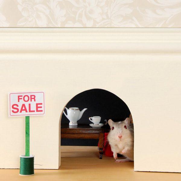 hoe muizen natuurlijk bestrijden tips