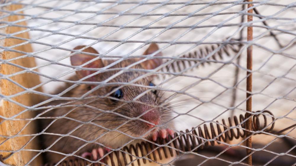 Muizen bestrijden zielig
