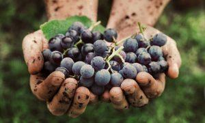 plantaardige wijn