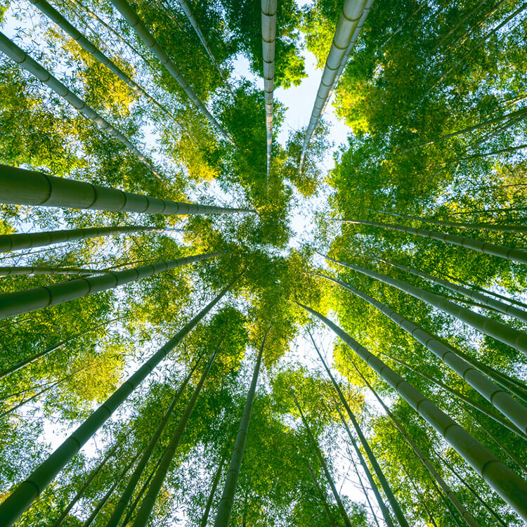 waarom is bamboe duurzaam