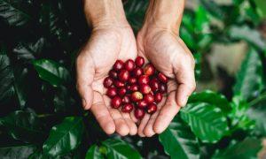 duurzaam koffie drinken koffiebonen
