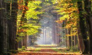 groene goede voornemens bos