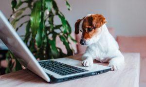 duurzaam werken laptop