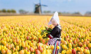 duurzame bloemen - Nederlands tulpenveld