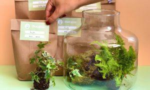 duurzame planten Botame