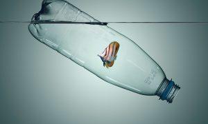 merken die plasticvervuiling tegengaan zeedieren