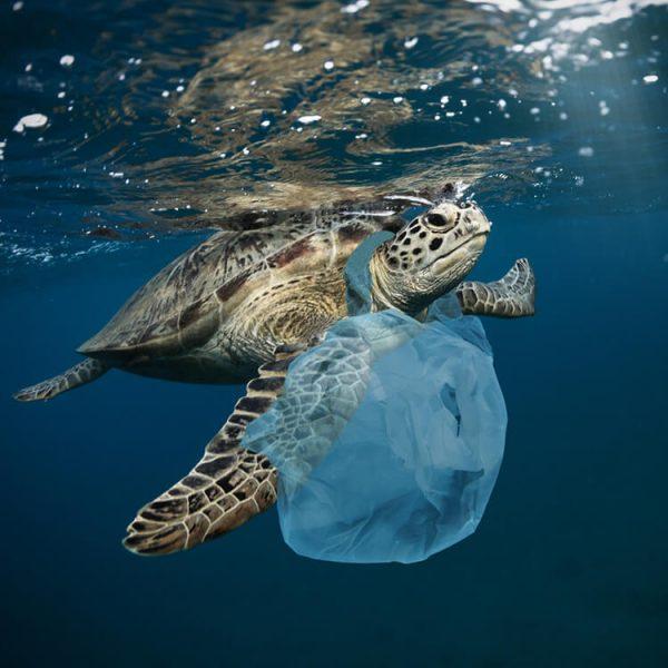 merken die plasticvervuiling tegengaan