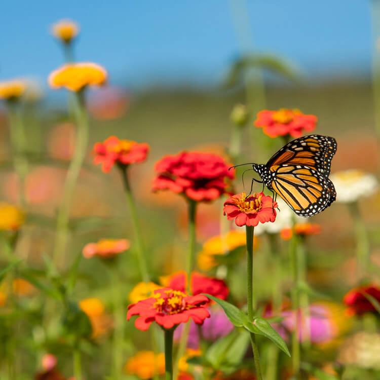 Biodiversiteit Nederland merken
