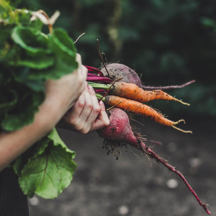 Moestuinkalender 2021 groenten zaaien en oogsten