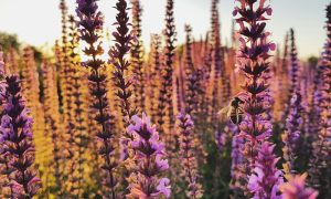 SpringBox biodiversiteit boosten The Pollinators