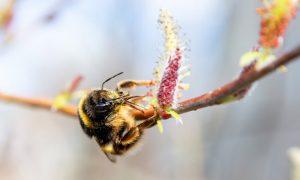 The Pollinators biodiversiteit