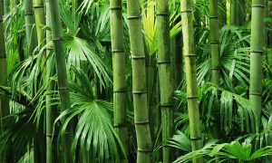 bamboe duurzaam blog